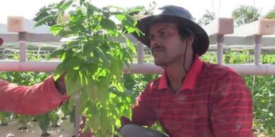 Gratitude Farms- A journey in Aquaponics & Organic Farming
